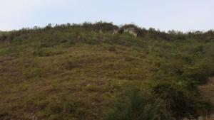 Descubren otro acceso en un sector de Kuélap que no se concluyó de construir