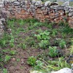 Lamentablemente el propietario del terreno, está cultivando verduras dentro de una de las viviendas. En otro caso se nota que ha utilizado parte de las piedras de las construciones para hecer su cerca