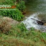 una pequeña corriente de agua desemboca muy cerca de donde está ubicada ahora Pumachaca, en ella se puede ver otras piedras que formarían parte del lugar destinado al Culto al Agua