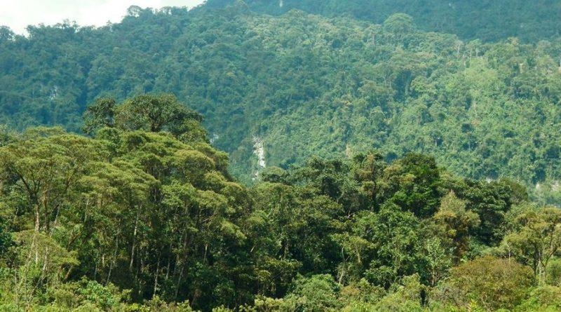 Concesión para conservación Cerro El Adobe, unapromesa para futuras generaciones